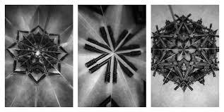 Mircea Cantor, Holy Flowers / 2010