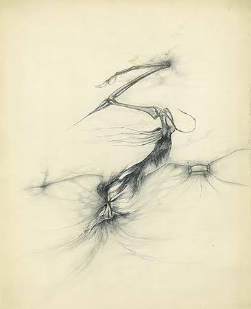 """© Paul Păun, Desen figurativ, [""""Lovaj""""], nedatat, Tuș cu peniță pe hârtie, 260x320 mm, Colecția Petre Solomon."""